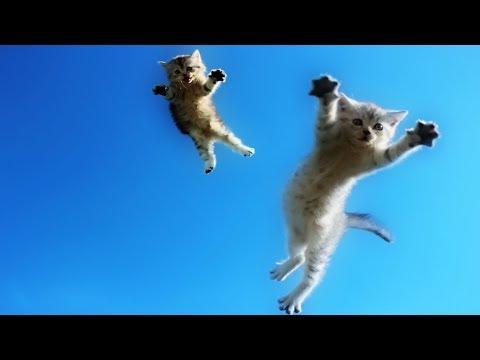 Funny Cats Jump Fail - Part 3