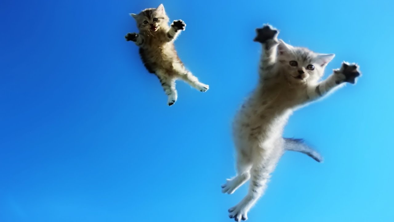 Image result for cats jumping