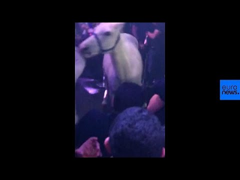 Video: Nightclub slammed after horse taken onto dancefloor