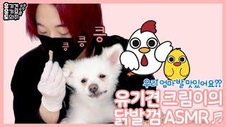 [유유도] 유기견 크림이의 닭발 껌 ASMR | 강아지…
