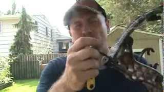 compound bow poundage adjustment