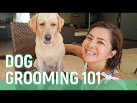 DOG GROOMING 101 // Alice Dixson