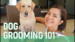 DOG GROOMING 101 // Alice Dixson