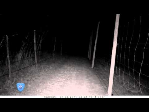 Serval Sighting - Caught on Night Vision Camera In South Africa
