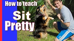 Dog Trick! How to Train Your Dog to Sit Pretty!