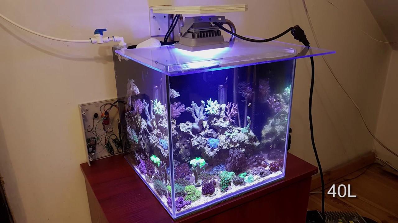 Wielkość Akwarium A Oświetlenie Led Pytania O Sprzet 60