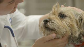 A UCD Veterinary Hospital Rotation Experience