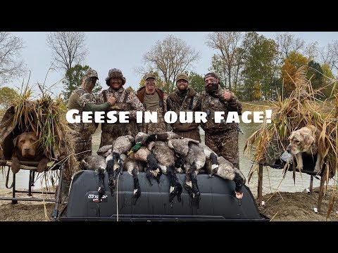 Indiana Duck And Goose Hunting 2019! 5 Man Limit! INSANE