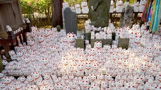 Temple Filled Of 1000 Lucky Cat Statues