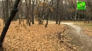 Помни. Анна Падылина и Алексей Стефанов