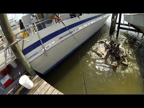 how to catch mangrove jack sunshine coast