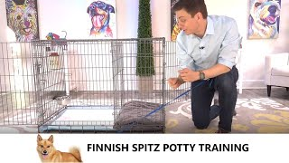 Finnish Spitz Potty Training from WorldFamous Dog Trainer Zak George   Train a Finnish Spitz Puppy