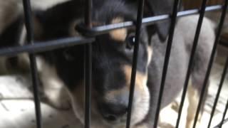 静岡県浜松市で犬のブリーダーと里親募集をしているペットのブリーダー...