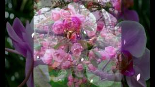 Happy Spring Season ,Wishes,Greetings,Sms,Quotes,E-card,Wallpapers,Whatsapp Video