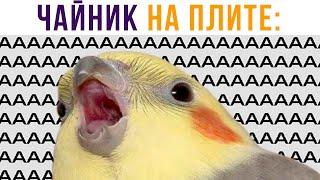 ЧАЙНИК НА ПЛИТЕ))) ААААААА!!! Приколы | Мемозг 715 видео
