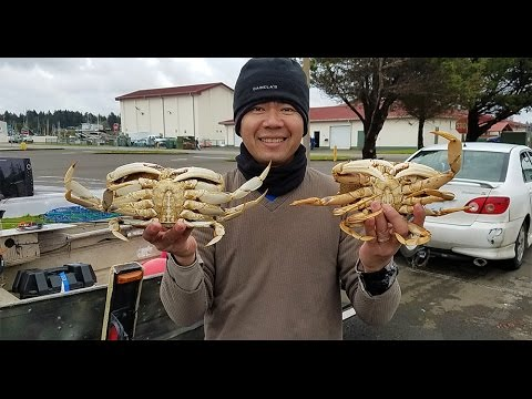 Catching Dungeness crabs on the Oregon Coast