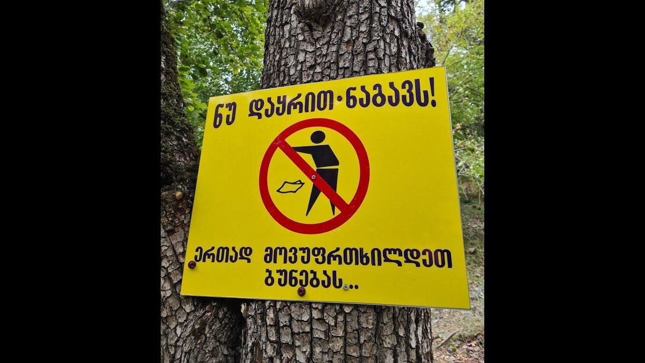 მსხალდიდის ტყის დასუფთავება