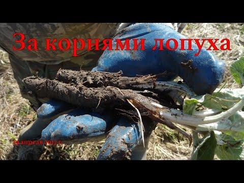 Каталог-энциклопедия лекарственных растений с фото и