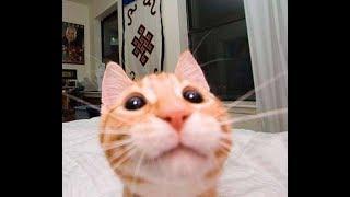Приколы с Котами - Смешные коты и кошки 2018 | Подборка видео с милыми котиками