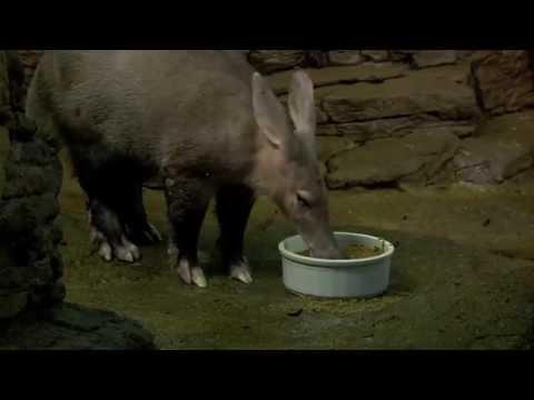 Aardvark Update - Cincinnati Zoo