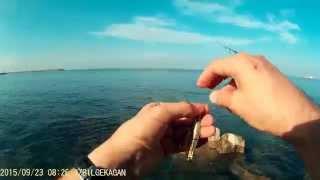 Akya ( Lichia Amia ) Avı - Shore Jigging