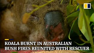 Koala badly burnt in Australian bush fires reunites with his heroic rescuer