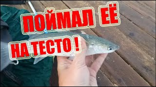 Как поймать кефаль Морская рыбалка в Турции как ловить рыбу в море Аланья Турция fishing in Alanya