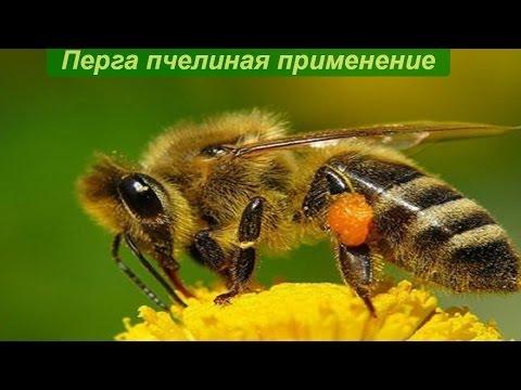 Хлебина Тенториум - tentorium-