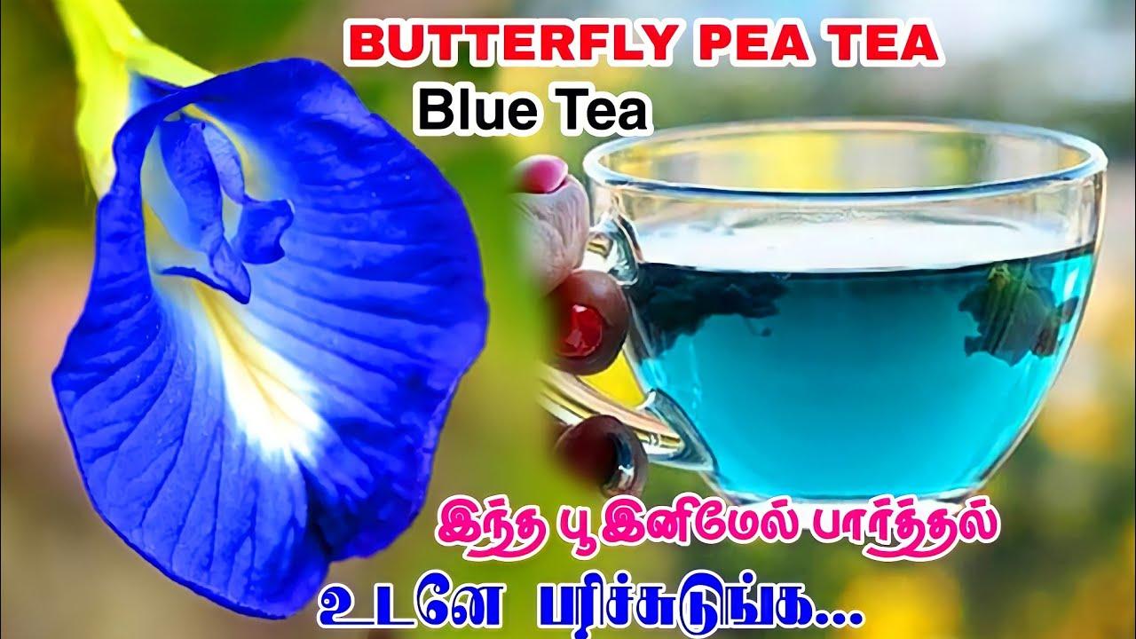 சங்குப்பூ டீ  Blue Tea Recipe  Sangu poo tea benifits in Tamil  Butterfly Pea Flowers  90kk