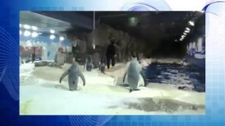 Смешные животные,подборка приколов 2015 №38,смешное видео, пингвины