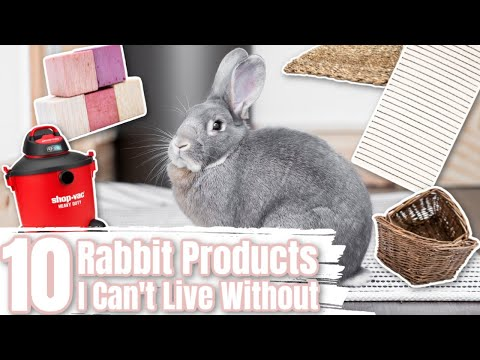 10 Rabbit Products I Can Not Live Without