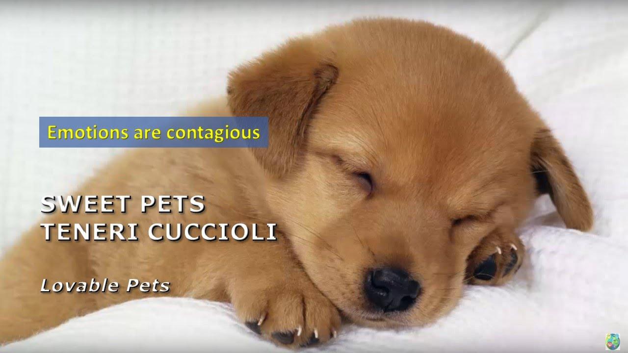 (virale) Teneri cuccioli che ci amano