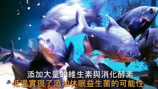 肉食魚最愛的-良心休眠益生菌全肉飼料