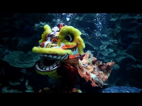 Underwater lion dance celebrates Lunar New Year in Malaysia