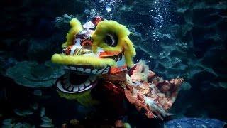 Underwater lion dance celebrates Lunar New Year in Malaysia
