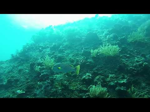 Two Weeks in Indonesia [HD] [GOPRO HERO3]