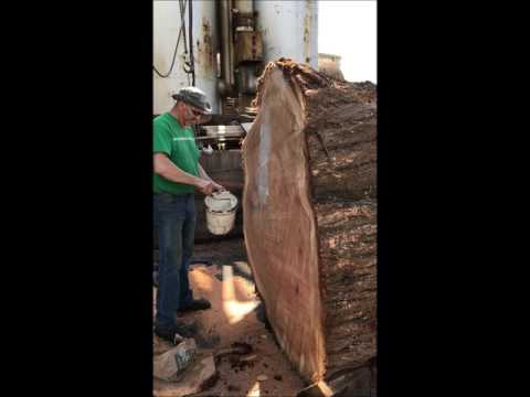 Milling giant redwood slab