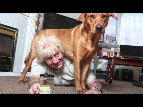 labrador-saves-pensioner-from-choking-to-death-on-pickled-onion