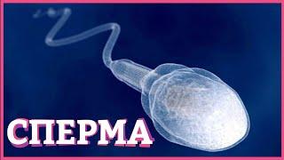 фАКТЫ ПРО СПЕРМУ  Вредна ли сперма, глотать или не глотать? Secrets Center