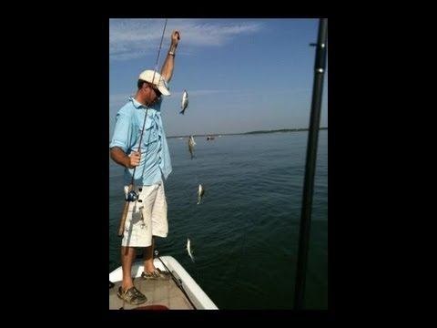 Lake Lavon White Bass Fishing