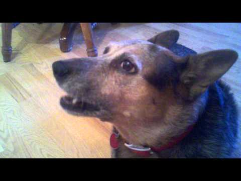 Buddhist Chanting Dog