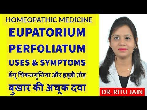 Eupatorium perfoliatum   homeopathic medicine eupatorium perfoliatum uses and symptoms