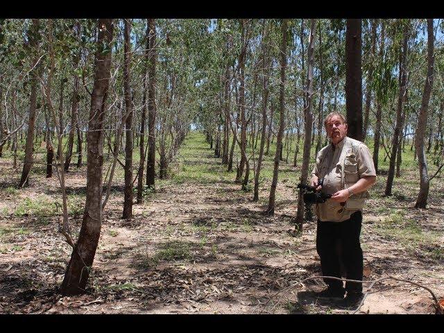 Miljøvernforbundet sitt klima og miljøprosjekt på Madagaskar