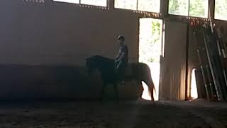 Обучение езды на лошадях выполнение задания Конный клуб Ягуар 13.09.2018