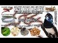 Manfaat Dan Penerapan Pada Pakan Burung Kacer Kacer Gacor Penuh Stamina  Mp3 - Mp4 Download