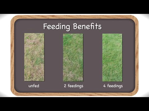 Feeding Your Grass Regularly for a Greener Beautiful Lawn - Scotts Lawn Food