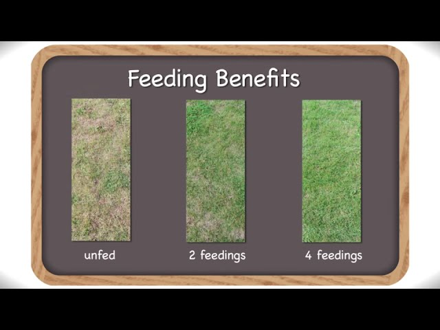 Weed And Feed With Scotts Sta Green Fertilizer Complete Year Round Guide