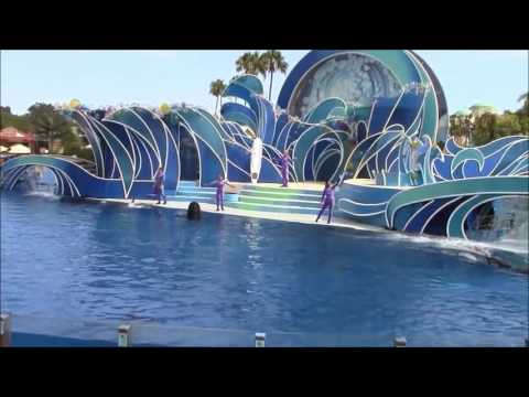 Pilot Whales Dolphin Days SeaWorld