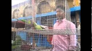 KOLKATA, GALIFF STREET BIRD MARKET VID-4