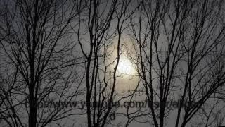 Боль, которая живет в лесу (Аудиокнига)